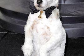 Muere 'Uggie', el perro  de 'The Artist'