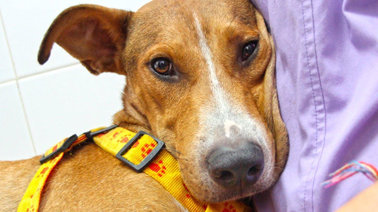 Una protectora rescata a un perro apuñalado y atado a un palo en Almería