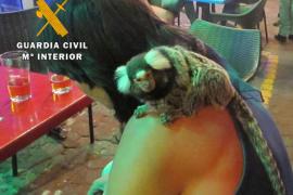 Tres denunciados en Sant Antoni por usar animales protegidos en espectáculos callejeros