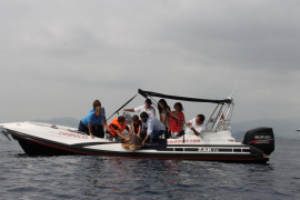 Liberan a una tortuga marina de 34 kilos en el Port de Pollença