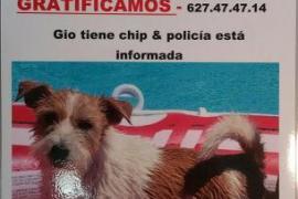 Encuentran en buen estado a 'Gio', el perro desaparecido en Calvià