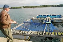 Madrid autoriza, después de 12 años de trámites, una piscifactoría en Portocolom