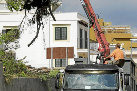 Cort abrirá expediente por la tala de pinos sin licencia en la zona de Porto Pi
