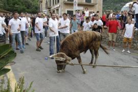 La asociación para la protección de los animales denuncia el 'correbou' de Fornalutx