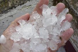 La granizada provocó daños puntuales y localizados en las explotaciones agrarias de Mallorca