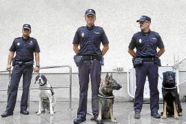 Perros con un 'olfato' especial para detectar dinero
