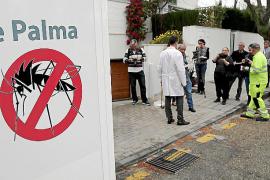 El mosquito tigre se hace fuerte en Palma