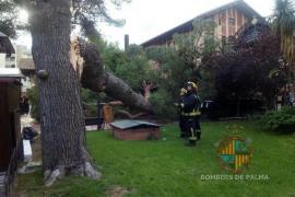 La caída de un pino en s'Escorxador deja dos heridos leves