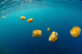 'Mirades obertes a la natura', fotografía naturalista en Marratxí