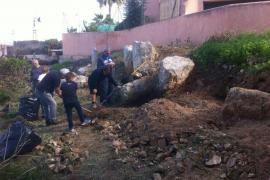 Limpieza del poblado talayótico de Cas Quitxero por los vecinos del Pla de Sant Jordi