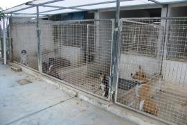 La «dejadez total» y el «lamentable» estado de abandono de la perrera de Felanitx obligan a su cierre