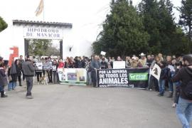 Los animalistas celebran la prisión del hombre que mató a su caballo: «Ya era hora»