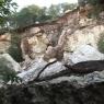 El derrumbe de la Cova Llarga de Petra causa la caída de más de 2.500 toneladas de roca