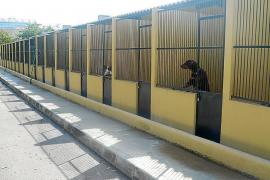 El condenado por dejar morir de hambre a su perro en Palma ya está en la cárcel