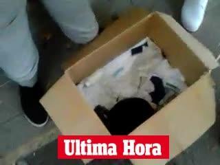 Denuncian la venta ilegal de cachorros en Palma y la pasividad de la Policía Local