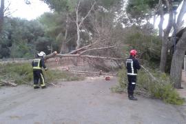 El fuerte viento causa destrozos en distintas zonas de Mallorca