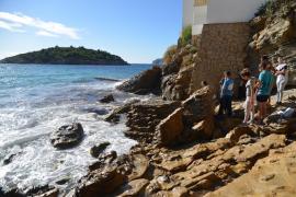 Aparece muerto un cetáceo de cuatro metros en Sant Elm
