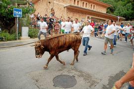 El PP intenta salvar el Bou de Fornalutx pidiendo que sea declarado Patrimonio Inmaterial
