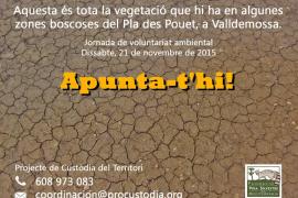 Jornadas de voluntariado en Valldemossa para la repoblación de especies autóctonas
