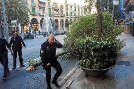 Los bomberos intervienen en diversos incidentes por el viento en Palma y Calvià