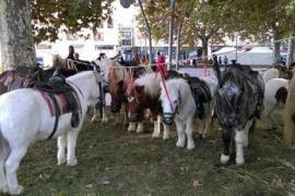 ASSAIB denuncia prácticas ilegales con animales durante el Dijous Bo