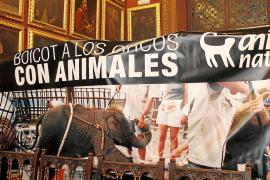 Cort prohíbe que en Palma se instalen circos con animales salvajes