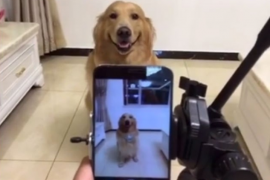 La perra que 'sonríe' ante la cámara triunfa en las redes