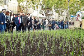 La Plaça Major de sa Pobla se transforma en un gran arrozal