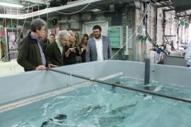 El Govern creará la Reserva marina del Freu de sa Dragonera