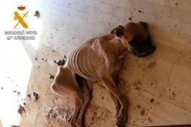 Dos detenidos por dejar morir de deshidratación a una boxer