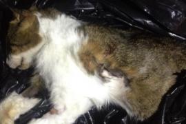 Denuncian la muerte a tiros de una gata en Valldemossa y la mala salud de un perro en Can Valero