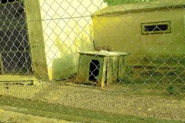 UM denuncia el «lamentable» estado de la perrera municipal