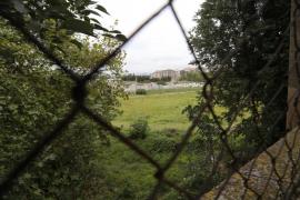 Cort creará un bosque en pleno centro de Palma