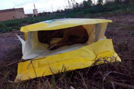Hallan en Palma un saco con un perro y un faisán muertos
