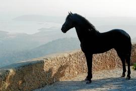 Un santuario para caballos en Menorca