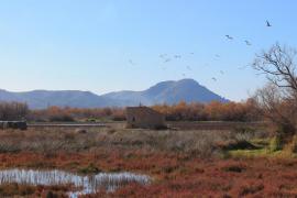 La mala calidad del agua ahuyenta la población de aves en la Albufera