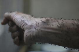 Confirman el primer caso de una persona con el virus del Zika en Dinamarca