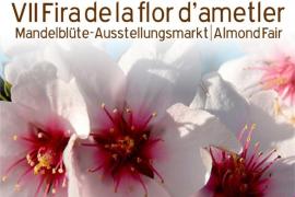 Son Servera celebra la VII Fira de la Flor d'Ametler