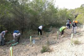 Turistas reforestando Peguera