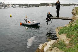 Un pescador halla un tiburón cañabota agonizante junto al Lazareto de Menorca