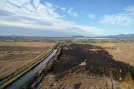 El Seprona investiga las causas de un incendio que quemó 36 hectáreas de cañizo en s'Albufera