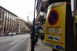Cort sustituirá los  árboles sembrados en la calle Jaume III