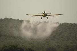 Medi Ambient no prevé la fumigación aérea  para combatir la procesionaria