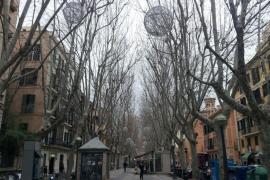 La poda de los árboles de la Rambla y el Born obligará a realizar cortes de tráfico