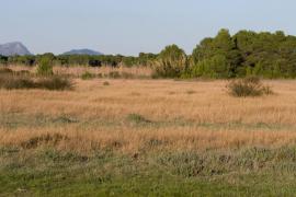 Una sentencia declara ilegal el campo de golf de Son Bosc y consolida su protección