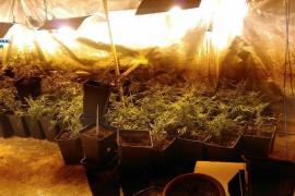 Detenida en Palma la propietaria de una plantación de marihuana