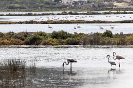 Las inversiones de la ecotasa serán la imagen de Balears en Europa