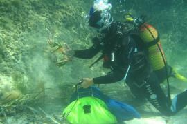 La base militar de Pollença podría alojar un vivero de posidonia para repoblar la bahía
