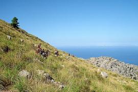 El Consell retoma el proyecto de la ruta Artà-Lluc tras cinco años en el olvido