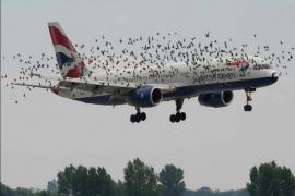 Un avión de Alicante a Munich regresa al aeropuerto tras impactar un ave contra una de las alas en el despegue